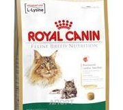 Фото Royal Canin Maine Coon 31 Adult 10 кг